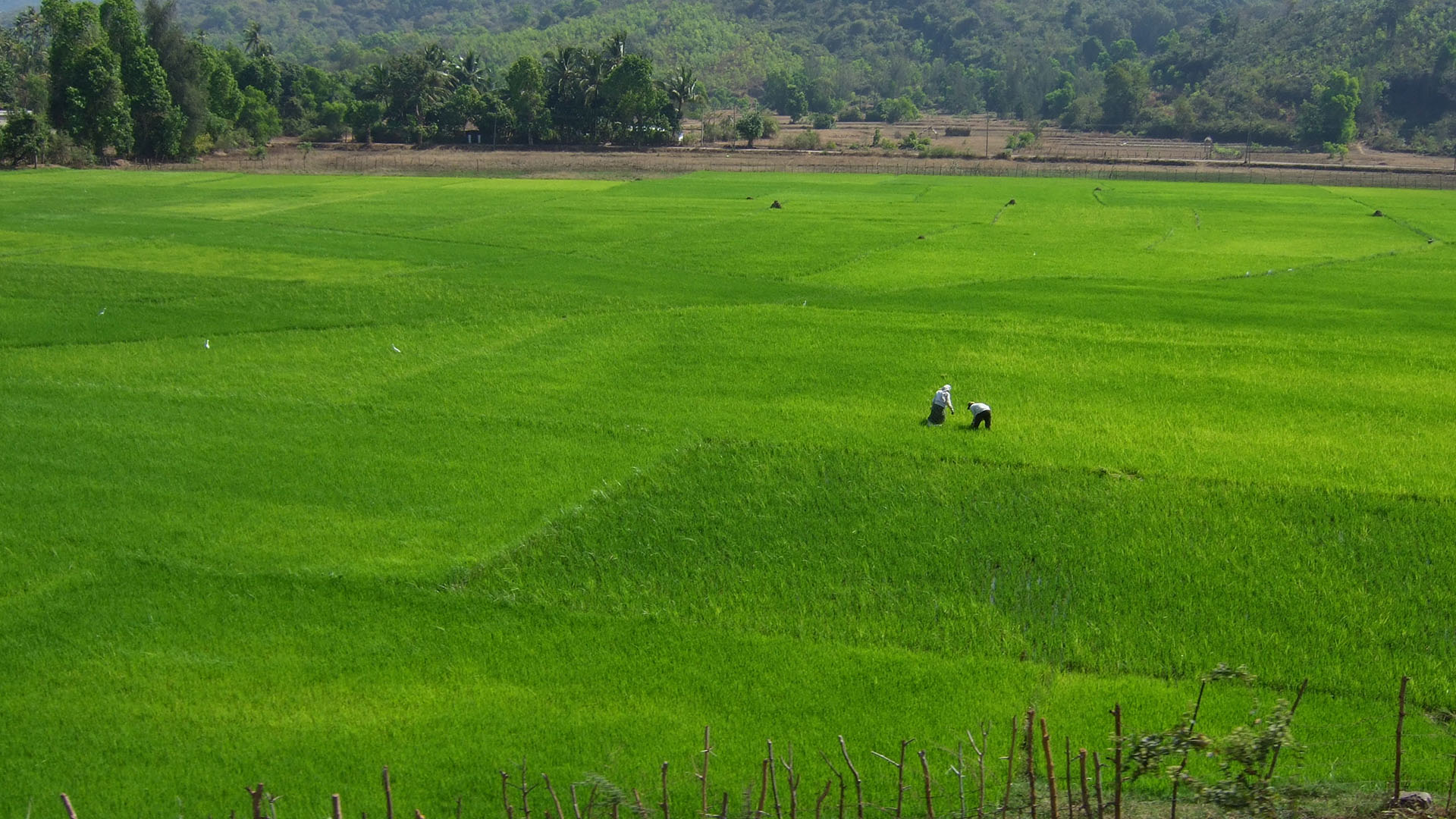 Goa kırsalı