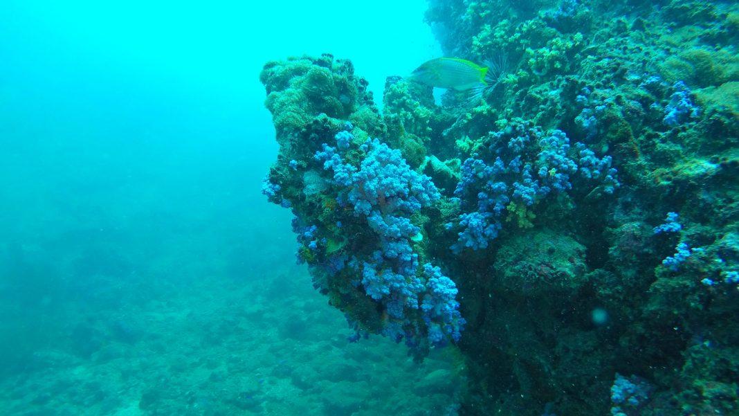 Koh Phi Phi Leh adasında mercan kayalıkları